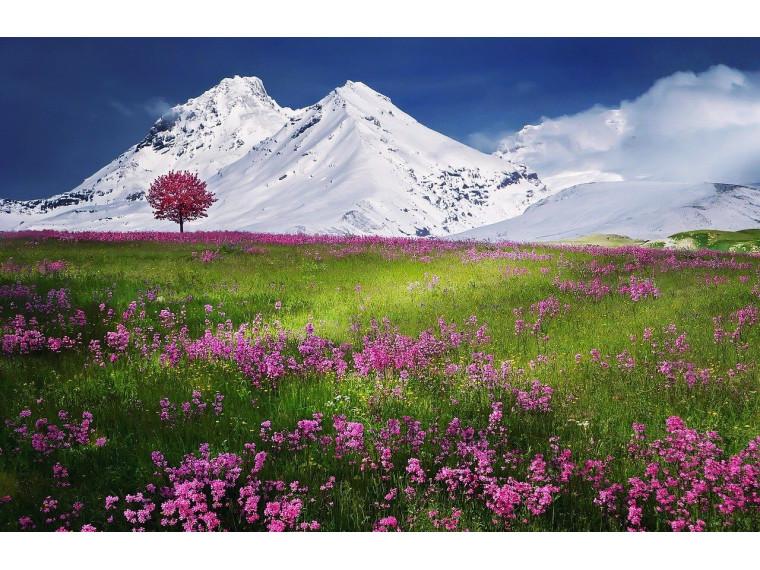 Альпийская поляна