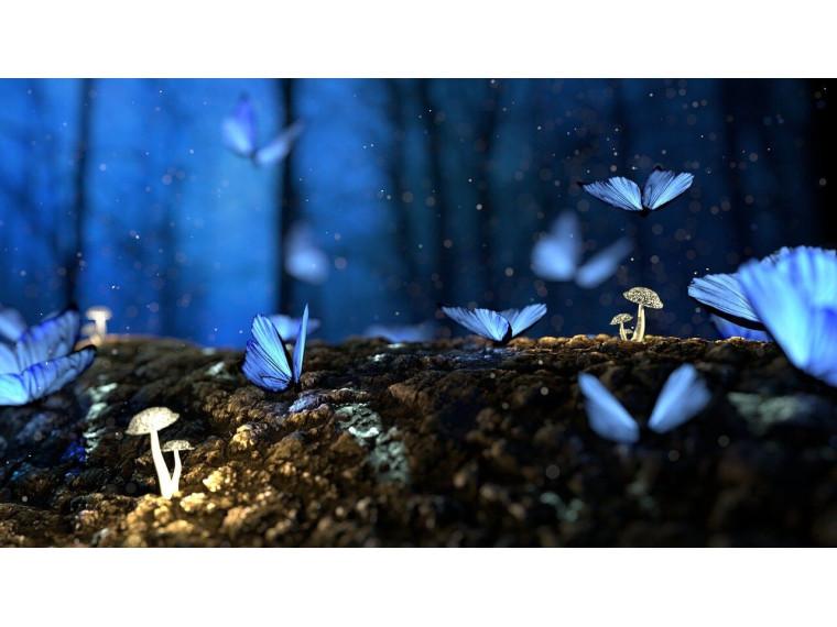 Бабочки в сказочном лесу