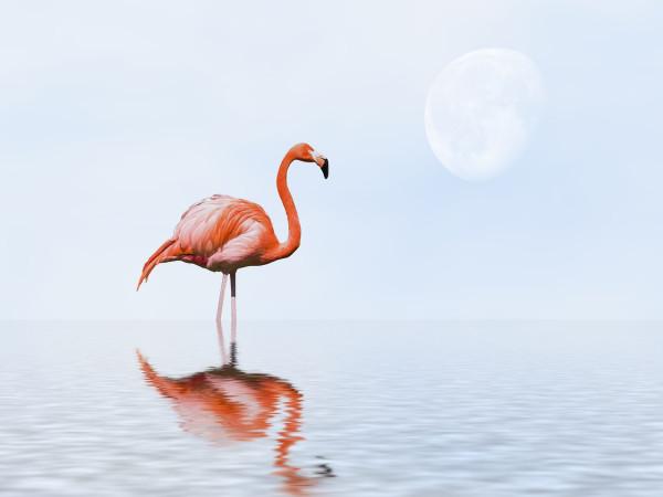 Фламинго и Луна