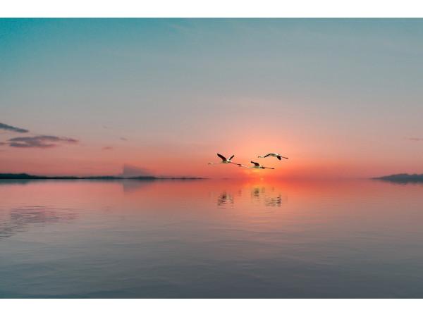 Полет фламинго на закате