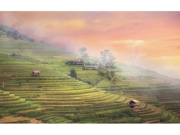 Рисовые террасовые поля