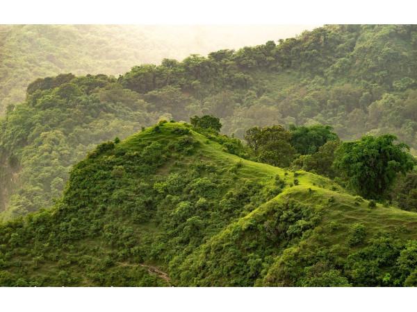 Утопающие в зелени холмы